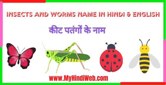 Insects and Worms Name